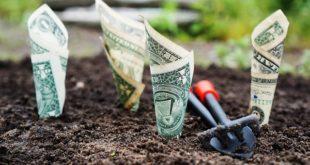 dinero, dólares, inversión, crecimiento, beneficios