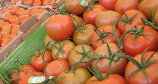 EU podría flexibilizar su postura ante inspección de tomates mexicanos