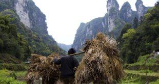 trabajador, campo, cosecha, rural, inclusión financiera