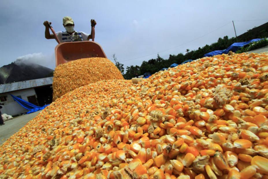 maíz, autosuficiencia