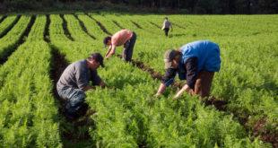"""Preocupa a agricultores de EU que resultado de TLCAN cree """"nuevas barreras"""""""