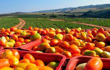 EU retiró cláusula de estacionalidad agrícola, asegura el CNA