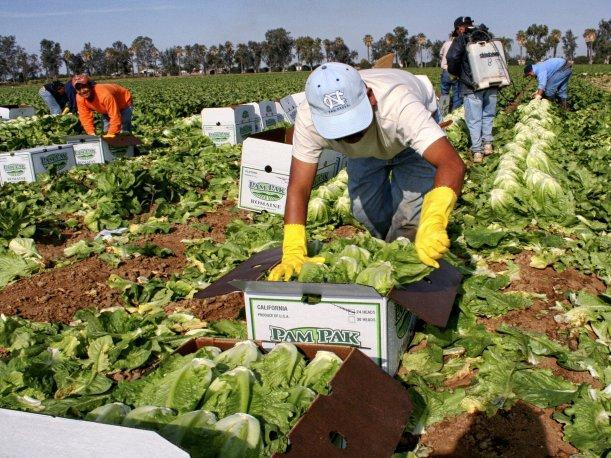 agrícola, reforma