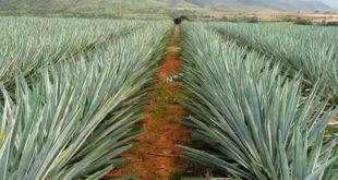 Productores mexicanos logran ventas por más de 50,000 mdp en China