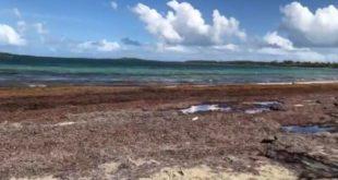 Prepara Q Roo inversión de 200 mdp para proteger playas del sargazo