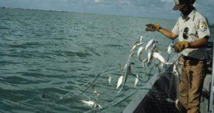 Corte de EU ordena prohibir importaciones de pescados y marisco mexicanos