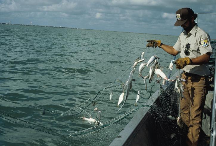 Corte de EU ordena prohibir importaciones de pescados y marisco mexicanos, redes, pesca