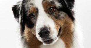 Gastan millennials hasta 3,500 al mes en sus mascotas