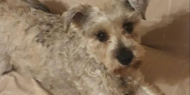 Registra a tus mascotas en Locatel y evita extorsiones