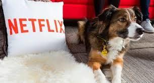 ¿Te gustan los perros? No te pierdas Dogs, el documental de Netflix sobre ellos