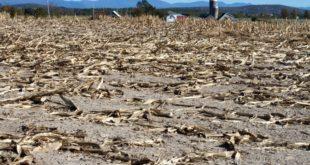Declaratoria de desastre natural en nueve municipios de Durango