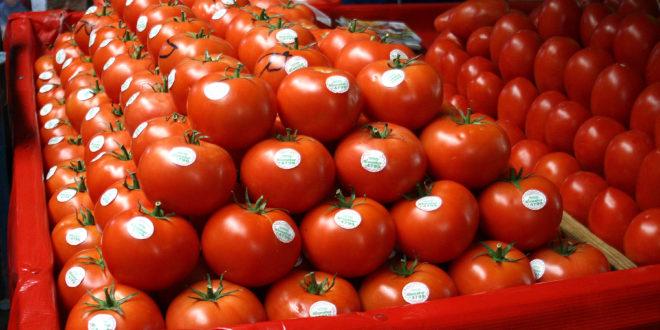 Arancel al tomate recorta hasta un 30% empleo en parcelas, productores