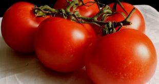 Senadoras de EU urgen cese de investigación contra tomate mexicano