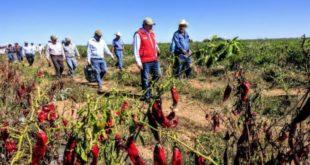 Diputados de Morena se retractan; piden a Senado retirar gravamen al agua en el campo