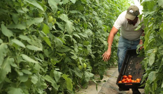 México considera revés arancelario si EU activa estacionalidad agrícola