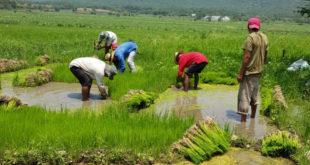 CNA sugiere que menores puedan trabajar en el campo