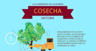Almendras de California, cosecha histórica