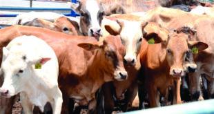 Valor de producción agropecuaria en SLP creció 79.5% en 5 años