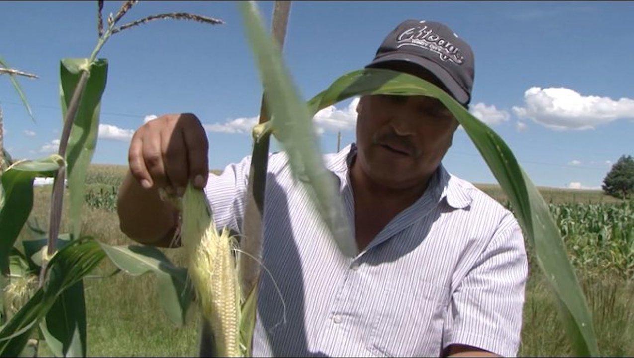 Producción agrícola de México / @Agricultura_mex