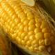 Ingredion y Coca-Cola firman convenio para aumentar producción de maíz amarillo