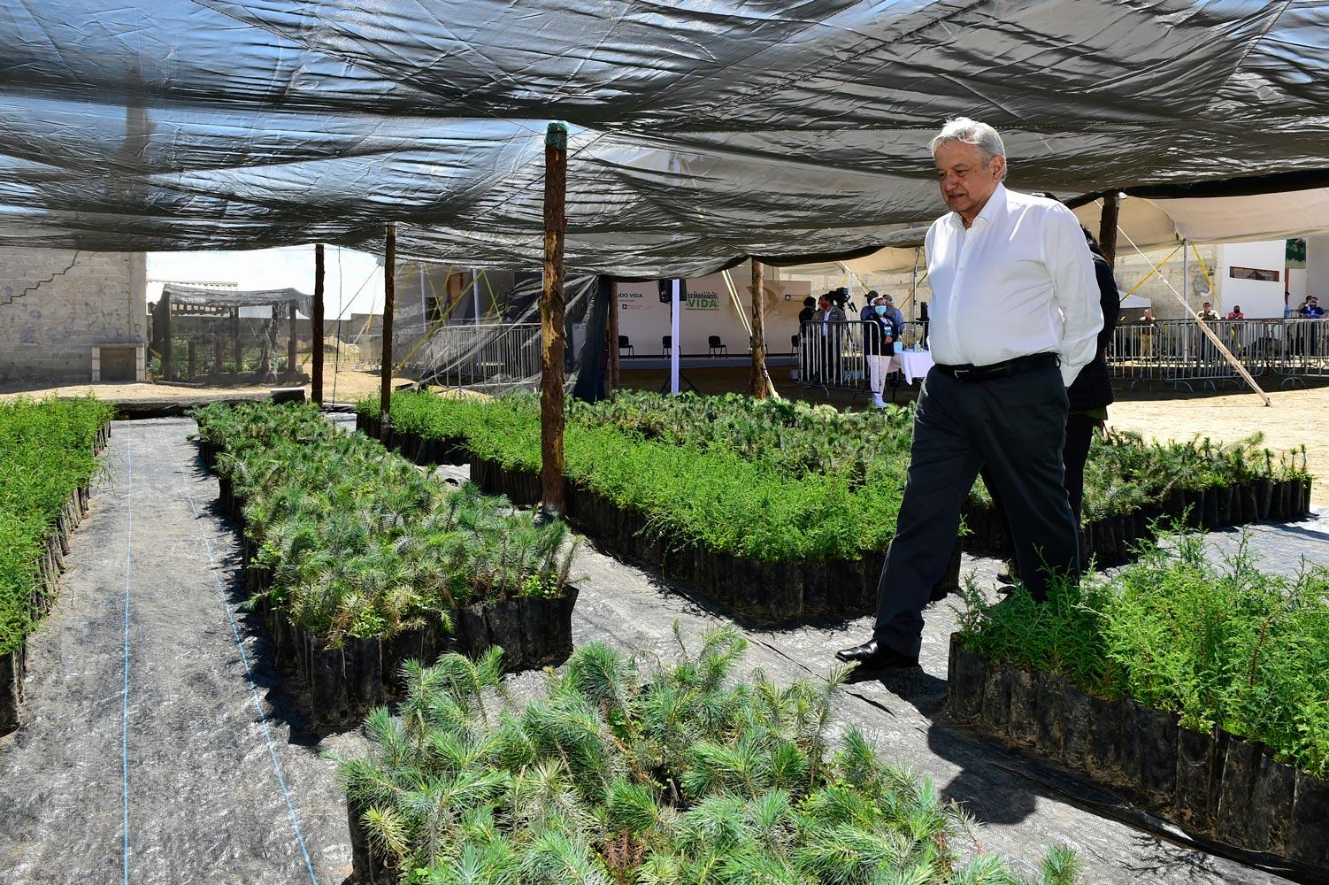 Sembrando Vida podría convertirse en ruta para residenciaen EU, sugiere AMLO a Biden