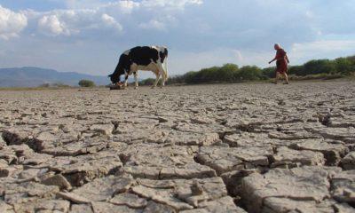 Sequía podrían presionar precios y producción de agropecuarios: Banxico