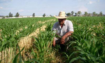 Hacienda eliminará el Programa de Aseguramiento Agropecuario