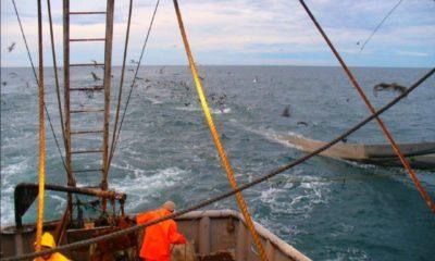 Industria pesquera / @canainpescamx