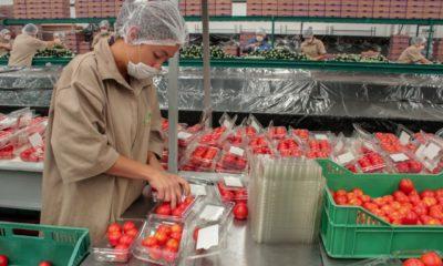 Empacadora de jitomate / @Agricultura_mex