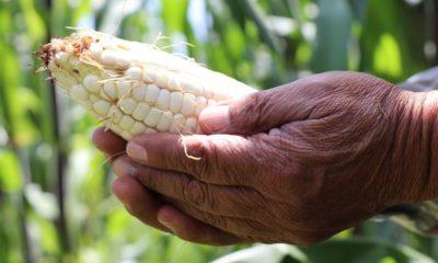 Producción agrícola / @GobCDMX